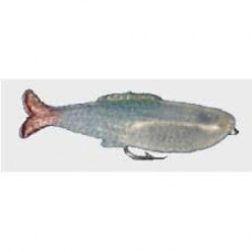 ISCA FISHTEX - PEIXE-2 AB